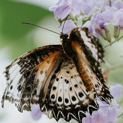 The Ins and Outs of Butterfly Gardening @ 1st Presbyterian Church of Dearborn | Dearborn | Michigan | United States